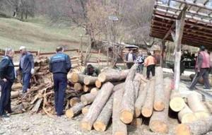 perchezitii, lemn, stiri, bacau
